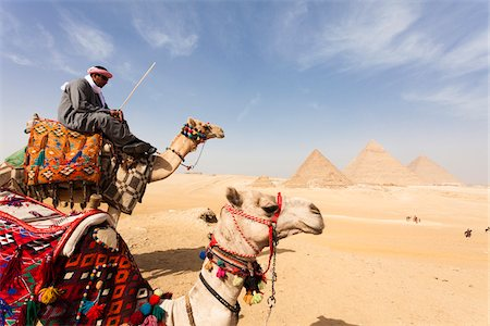 riding crop - Bedouin Man with Camels in front of Great Pyramids of Giza. Egypt Stock Photo - Rights-Managed, Code: 700-06355304
