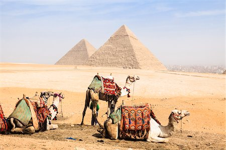 Camels in front of Great Pyramids, Giza, Egypt Stock Photo - Rights-Managed, Code: 700-06355300