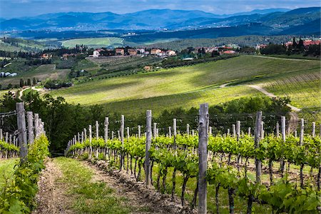 Vineyard, Chianti, Tuscany, Italy Stock Photo - Rights-Managed, Code: 700-06367839