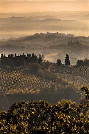 Fog over Vineyards at Dawn, Chianti, Tuscany, Italy Stock Photo - Rights-Managed, Code: 700-06367885