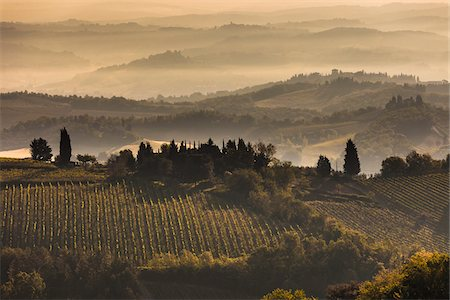 Fog over Vineyards at Dawn, Chianti, Tuscany, Italy Stock Photo - Rights-Managed, Code: 700-06367886