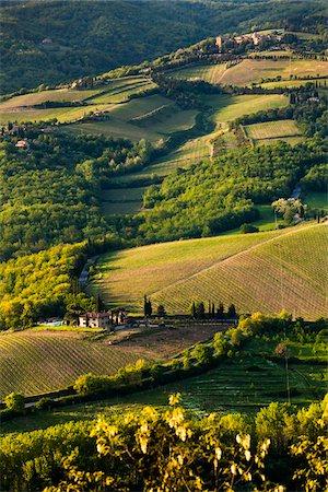 Farmland, Radda in Chianti, Tuscany, Italy Stock Photo - Rights-Managed, Code: 700-06367880