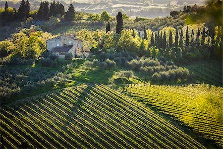 Farmhouse and Vineyard, San Gimignano, Siena Province, Tuscany, Italy Stock Photo - Rights-Managed, Code: 700-06367914