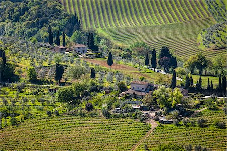 Vineyard, San Gimignano, Siena Province, Tuscany, Italy Stock Photo - Rights-Managed, Code: 700-06367911