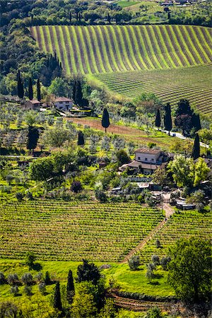 Vineyard, San Gimignano, Siena Province, Tuscany, Italy Stock Photo - Rights-Managed, Code: 700-06367912