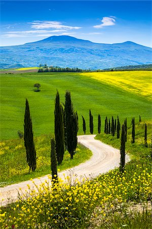 spring flowers - Tree-Lined Road and Meadow, Montalcino, Tuscany, Italy Stock Photo - Rights-Managed, Code: 700-06367940