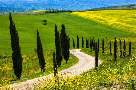 Montalcino, Tuscany, Italy Stock Photo - Rights-Managed, Code: 700-06367941