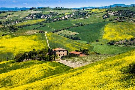 Farmhouse and Vineyard, Montalcino, Val d'Orcia, Province of Siena, Tuscany, Italy Stock Photo - Rights-Managed, Code: 700-06368034