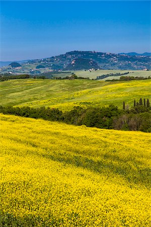 european hillside town - Canola Fields, Volterra, Tuscany, Italy Stock Photo - Rights-Managed, Code: 700-06368129