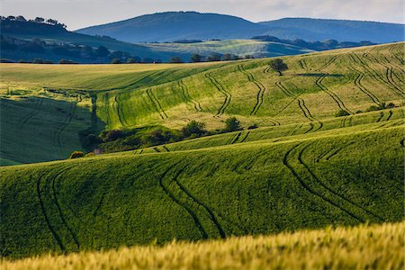 Rolling Farmland, Monticchiello, Val d'Orcia, Province of Siena, Tuscany, Italy Stock Photo - Rights-Managed, Code: 700-06368149
