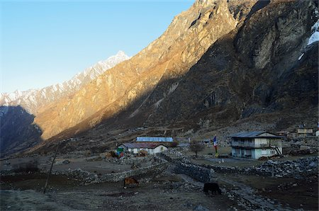 Village at Kyanjin Gumba, Langtang National Park, Bagmati, Madhyamanchal, Nepal Stock Photo - Rights-Managed, Code: 700-06383821