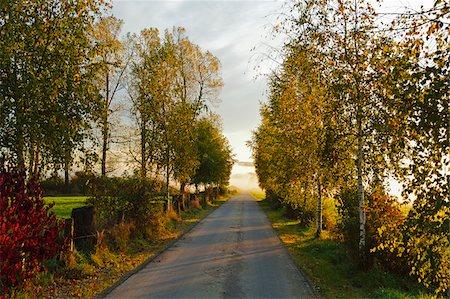 Country Road in Autumn, near Villingen-Schwenningen, Baden-Wurttemberg, Germany Stock Photo - Rights-Managed, Code: 700-06397546