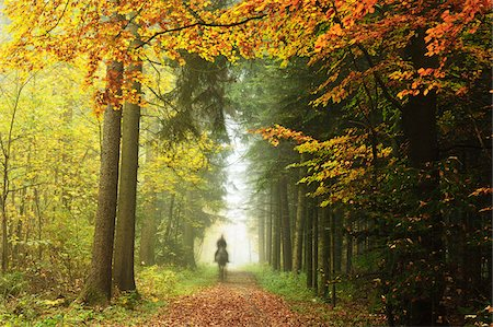 Person Riding Horse in Forest, Neckar Valley, near Villingen-Schwenningen, Baden-Wurttemberg, Germany Stock Photo - Rights-Managed, Code: 700-06397555