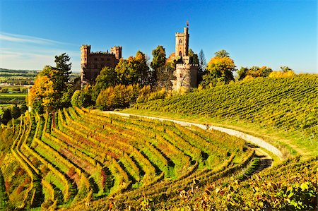 Ortenberg Castle and Vineyards in Autumn, near Offenburg, Ortenau District, Baden-Wurttemberg, Germany Stock Photo - Rights-Managed, Code: 700-06397556
