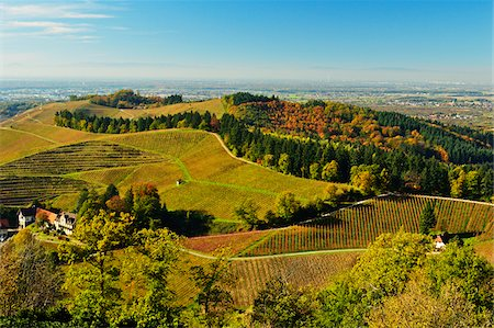 european hillside town - Hillside Vineyards in Autumn, Ortenau, Black Forest, Baden-Wurttemberg, Germany Stock Photo - Rights-Managed, Code: 700-06397560