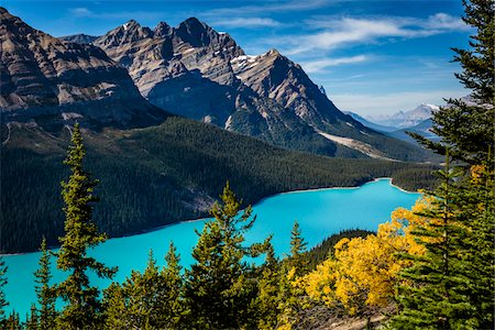 fall trees lake - Overview of Peyto Lake as seen from Bow Summit, Banff National Park, Alberta, Canada Stock Photo - Rights-Managed, Code: 700-06465437