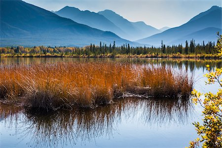 fall trees lake - Long Grass in Vermilion Lakes with Mountain Range in Background, near Banff, Banff National Park, Alberta, Canada Stock Photo - Rights-Managed, Code: 700-06465461