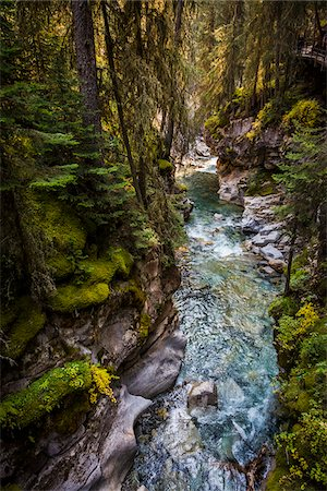 Johnston Canyon Rushing Through Forest, Banff National Park, Alberta, Canada Stock Photo - Rights-Managed, Code: 700-06465470