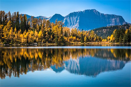 fall trees lake - Larix Lake with Autumn Larch, Rock Isle Trail, Sunshine Meadows, Mount Assiniboine Provincial Park, British Columbia, Canada Stock Photo - Rights-Managed, Code: 700-06465499