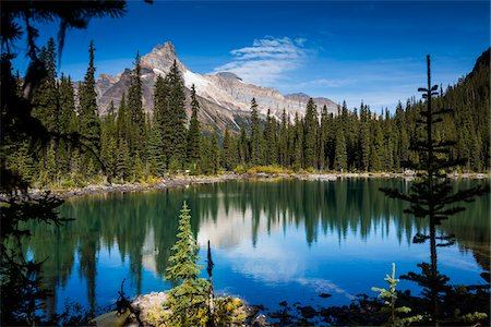 fall trees lake - Mountain Range and Alpine Lake Lined with Evergreen Trees, Lake O'Hara, Yoho National Park, British Columbia, Canada Stock Photo - Rights-Managed, Code: 700-06465516