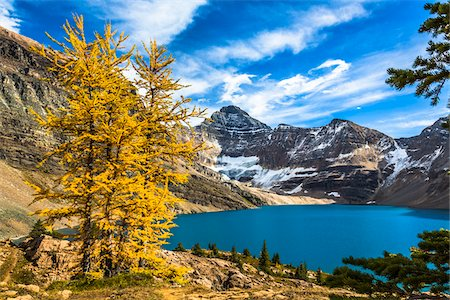 Autumn Larch at McArthur Lake, Yoho National Park, British Columbia, Canada Stock Photo - Rights-Managed, Code: 700-06465548
