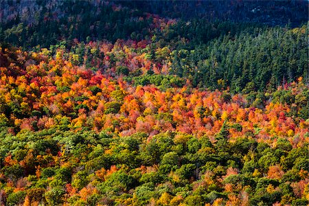 foliage - Aerial View of Forest in Autumn, Whiteface Mountain, Wilmington, Essex County, New York State, USA Stock Photo - Rights-Managed, Code: 700-06465595