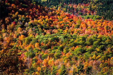 foliage - Aerial View of Forest in Autumn, Whiteface Mountain, Wilmington, Essex County, New York State, USA Stock Photo - Rights-Managed, Code: 700-06465596