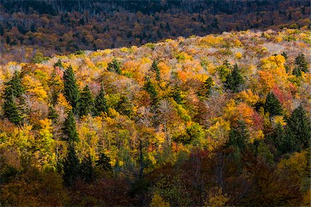 Overview of Forest in Autumn, Smugglers Notch, Lamoille County, Vermont, USA Stock Photo - Rights-Managed, Code: 700-06465607