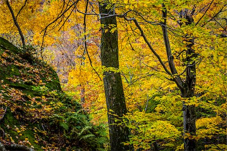 Forest Scene in Autumn, Smugglers Notch, Lamoille County, Vermont, USA Stock Photo - Rights-Managed, Code: 700-06465629