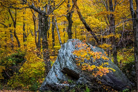 Boulder in Forest in Autumn, Smugglers Notch, Lamoille County, Vermont, USA Stock Photo - Rights-Managed, Code: 700-06465634