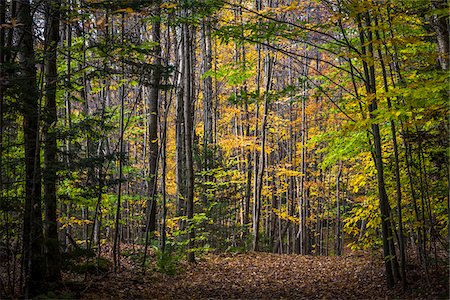 Hiking Trail Through Forest in Autumn, Moss Glen Falls Natural Area, C.C. Putnam State Forest, Lamoille County, Vermont, USA Stock Photo - Rights-Managed, Code: 700-06465635