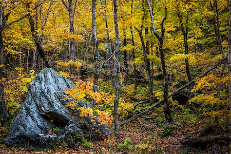 Boulder in Forest in Autumn, Smugglers Notch, Lamoille County, Vermont, USA Stock Photo - Rights-Managed, Code: 700-06465637