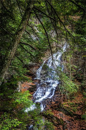 Waterfall and Evergreen Trees, Moss Glen Falls Natural Area, C.C. Putnam State Forest, Lamoille County, Vermont, USA Stock Photo - Rights-Managed, Code: 700-06465638