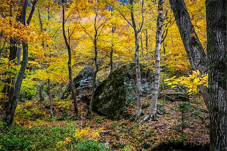 Boulders in Forest in Autumn, Smugglers Notch, Lamoille County, Vermont, USA Stock Photo - Rights-Managed, Code: 700-06465631