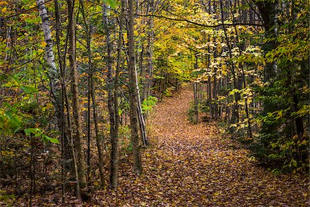 Hiking Trail Through Forest in Autumn, Moss Glen Falls Natural Area, C.C. Putnam State Forest, Lamoille County, Vermont, USA Stock Photo - Rights-Managed, Code: 700-06465645