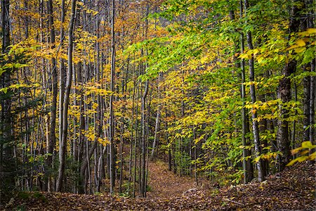 Hiking Trail Through Forest in Autumn, Moss Glen Falls Natural Area, C.C. Putnam State Forest, Lamoille County, Vermont, USA Stock Photo - Rights-Managed, Code: 700-06465646