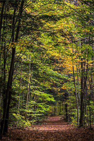 Hiking Trail Through Forest in Autumn, Moss Glen Falls Natural Area, C.C. Putnam State Forest, Lamoille County, Vermont, USA Stock Photo - Rights-Managed, Code: 700-06465648