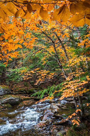 Rocky River and Autumn Leaves in Forest, Groton, Caledonia County, Vermont, USA Stock Photo - Rights-Managed, Code: 700-06465660