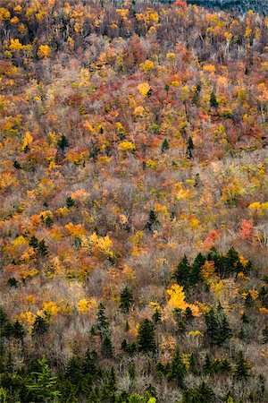 Trees with Autumn Leaves Interspersed with Bare Trees on Mountainside, White Mountain National Forest, White Mountains, New Hampshire, USA Stock Photo - Rights-Managed, Code: 700-06465688