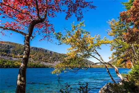Trees with Leaves in Autumn Transition Surrounding Jordan Pond, Acadia National Park, Mount Desert Island, Hancock County, Maine, USA Stock Photo - Rights-Managed, Code: 700-06465720
