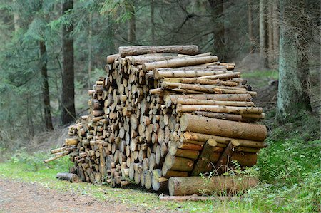 Pile of Firewood in Forest Stock Photo - Rights-Managed, Code: 700-06486494
