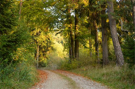 Gravel Road Through Beech Forest in Autumn, Upper Palatinate, Bavaria, Germany Stock Photo - Rights-Managed, Code: 700-06486495