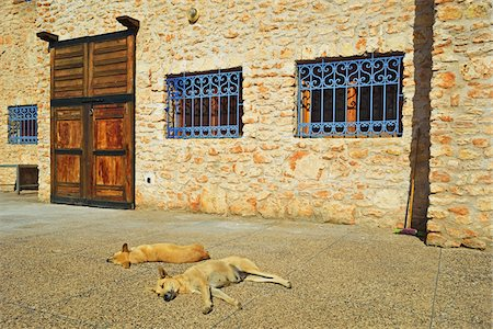 dog in heat - Two Dogs Sleeping in front of Stone Building with Barred Windows, Morocco, Africa Stock Photo - Rights-Managed, Code: 700-06505754