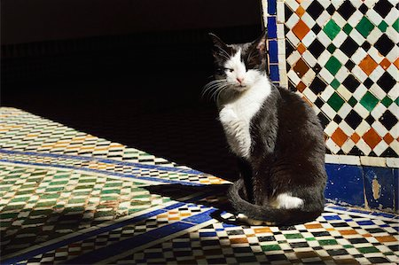 Portrait of Cat Sitting in Sun Beam on Tiled Floor, Bahia Palace, Medina, Marrakesh, Morocco, Africa Stock Photo - Rights-Managed, Code: 700-06505750