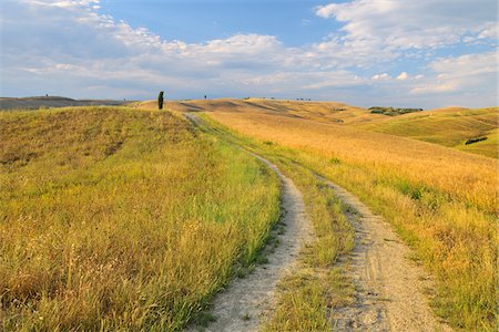 Path Through Field in the Summer, San Quirico d'Orcia, Province of Siena, Tuscany Italy Stock Photo - Rights-Managed, Code: 700-06512906