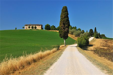 Rural Road with Cypress Tree in the Summer, Monteroni d'Arbia, Province of Siena, Tuscany, Italy Stock Photo - Rights-Managed, Code: 700-06512919