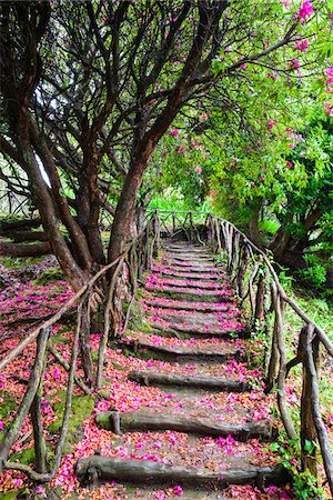 portugal - Footpath with Rhododendron Flowers on Ground, Queimadas, Madeira, Portugal Stock Photo - Rights-Managed, Code: 700-06531540