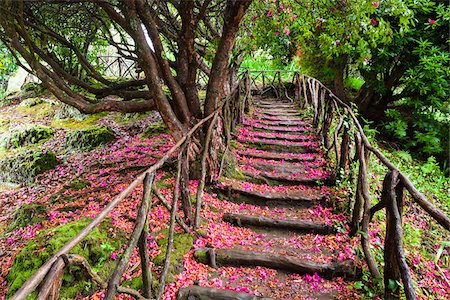 Footpath with Rhododendron Flowers on Ground, Queimadas, Madeira, Portugal Stock Photo - Rights-Managed, Code: 700-06531541