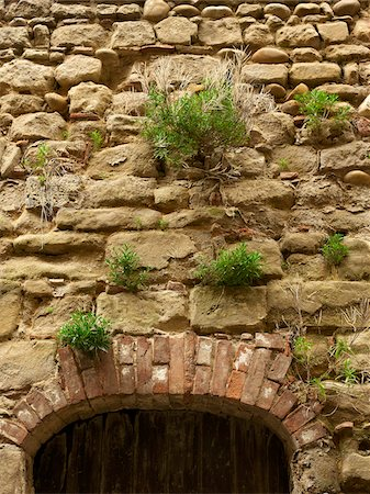 green plants growing out of stone bricks in wall above old arched doorway in the small medieval village of Saint-Antoine-l'Abbaye, France Stock Photo - Rights-Managed, Code: 700-06543492