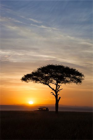 View of acacia tree and safari jeep silhouetted against beautiful sunrise sky, Maasai Mara National Reserve, Kenya, Africa. Stock Photo - Rights-Managed, Code: 700-06645854